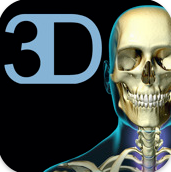 skeletal_system
